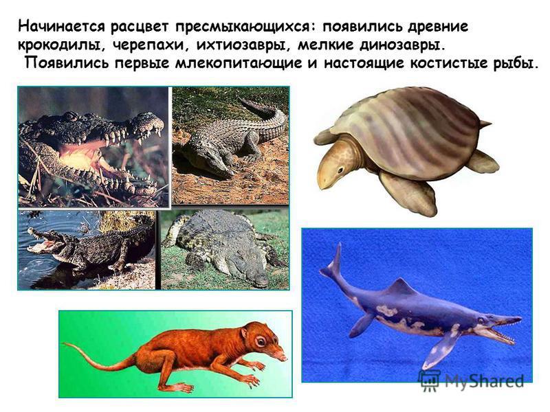 Начинается расцвет пресмыкающихся: появились древние крокодилы, черепахи, ихтиозавры, мелкие динозавры. Появились первые млекопитающие и настоящие костистые рыбы.