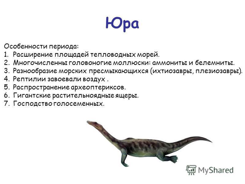Юра Особенности периода: 1. Расширение площадей тепловодных морей. 2. Многочисленны головоногие моллюски: аммониты и белемниты. 3. Разнообразие морских пресмыкающихся (ихтиозавры, плезиозавры). 4. Рептилии завоевали воздух. 5. Распространение археопт