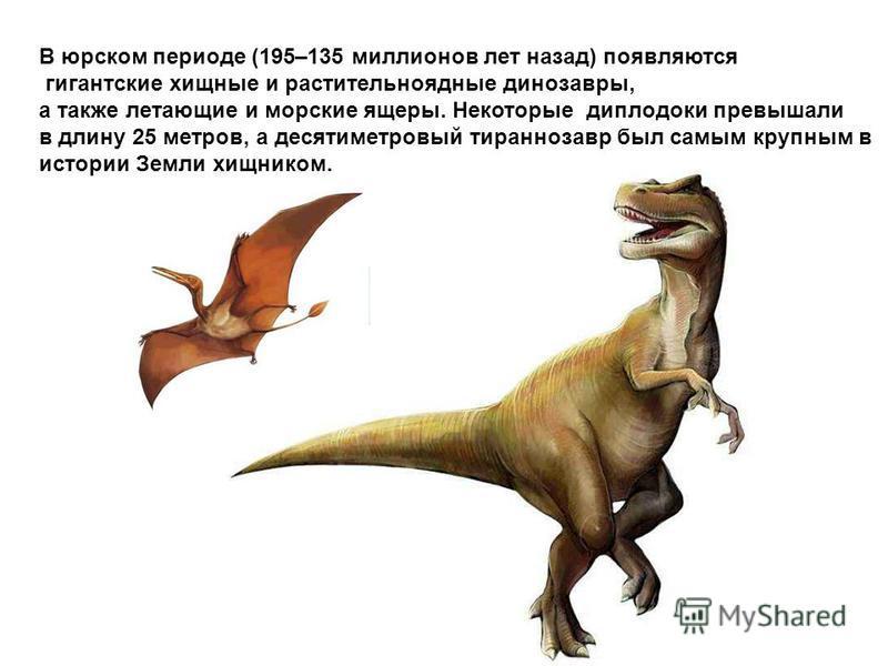 В юрском периоде (195–135 миллионов лет назад) появляются гигантские хищные и растительноядные динозавры, а также летающие и морские ящеры. Некоторые диплодоки превышали в длину 25 метров, а десятиметровый тираннозавр был самым крупным в истории Земл