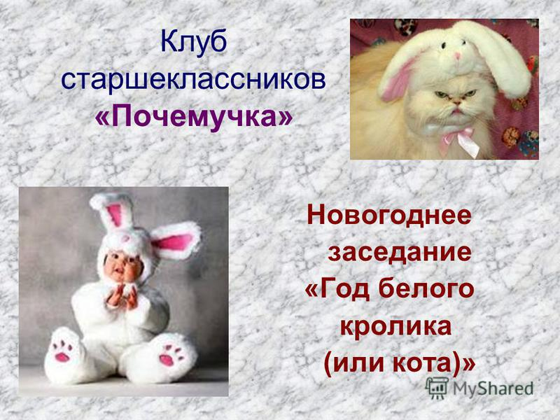 Клуб старшеклассников «Почемучка» Новогоднее заседание «Год белого кролика (или кота)»