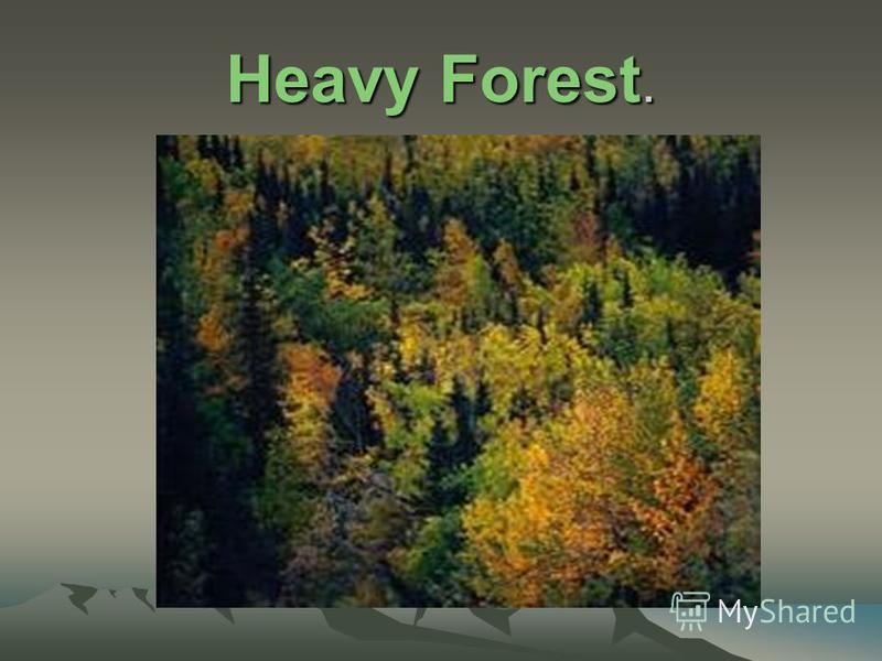 Heavy Forest.
