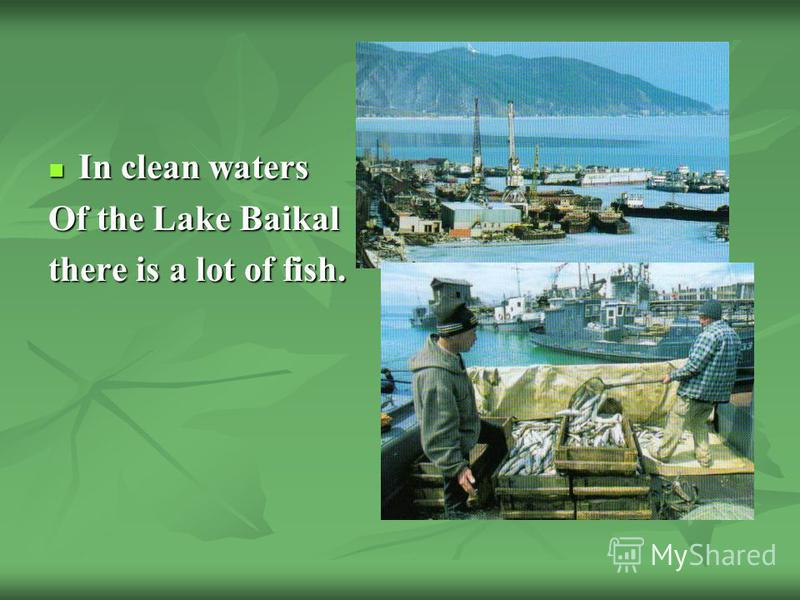 In clean waters In clean waters Of the Lake Baikal there is a lot of fish.