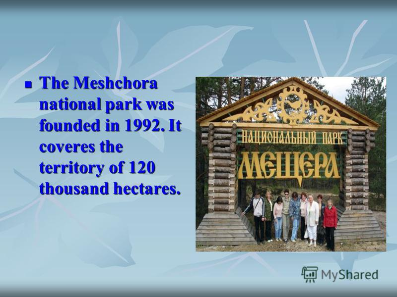 The Meshchora national park was founded in 1992. It coveres the territory of 120 thousand hectares. The Meshchora national park was founded in 1992. It coveres the territory of 120 thousand hectares.