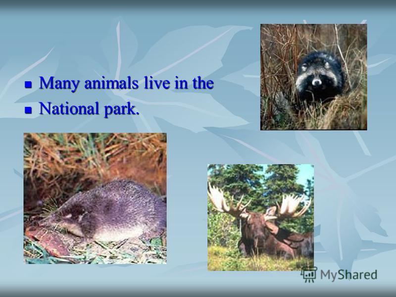 Many animals live in the Many animals live in the National park. National park.