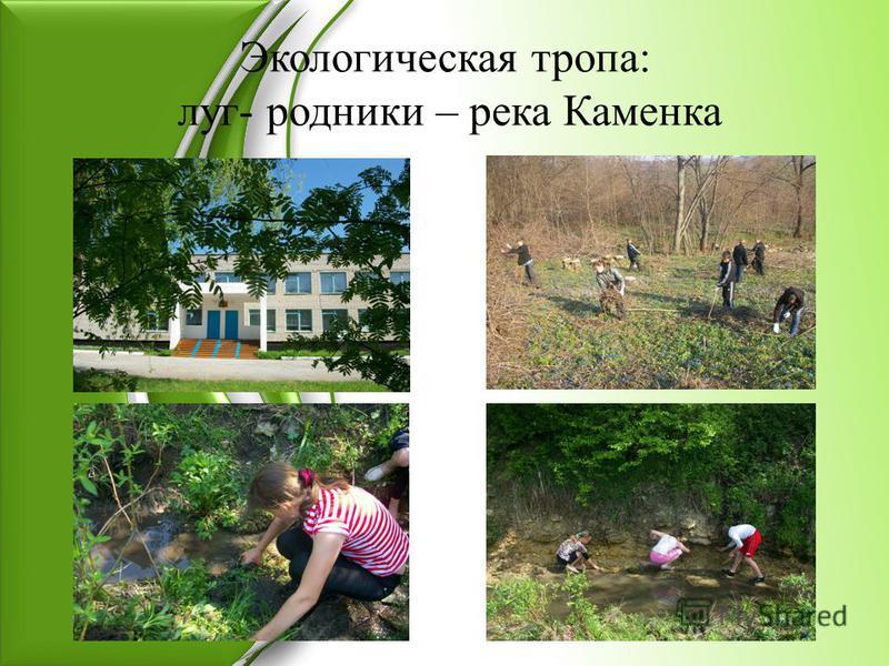 Экологическая тропа: луг- родники – река Каменка