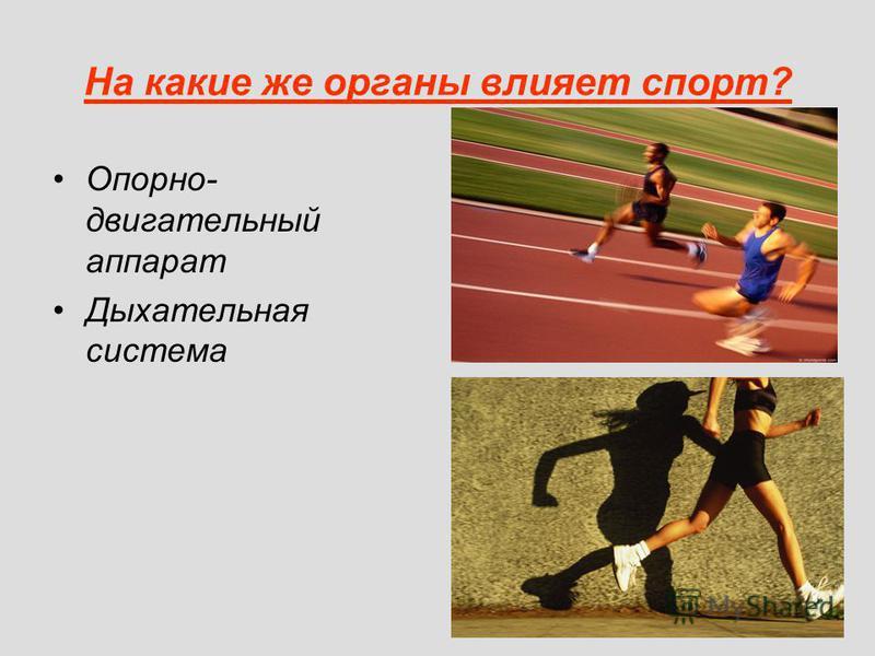На какие же органы влияет спорт? Опорно- двигательный аппарат Дыхательная система
