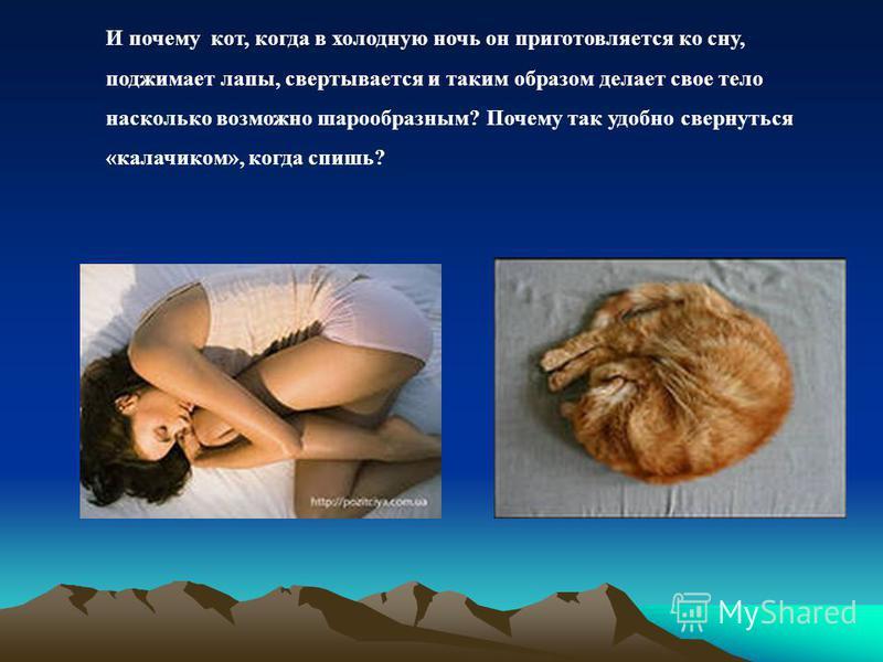 И почему кот, когда в холодную ночь он приготовляется ко сну, поджимает лапы, свертывается и таким образом делает свое тело насколько возможно шарообразным? Почему так удобно свернуться «калачиком», когда спишь?