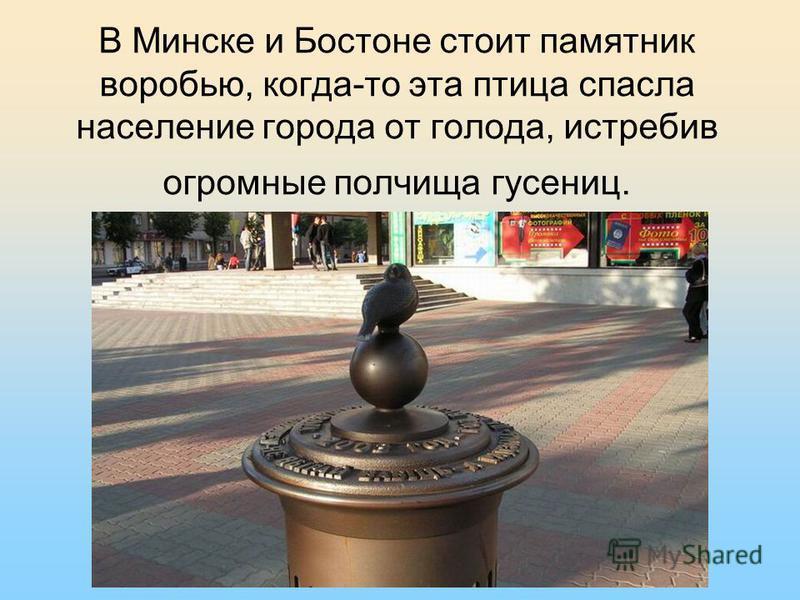 В Минске и Бостоне стоит памятник воробью, когда-то эта птица спасла население города от голода, истребив огромные полчища гусениц.
