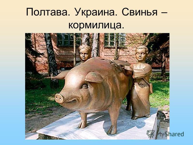Полтава. Украина. Свинья – кормилица.