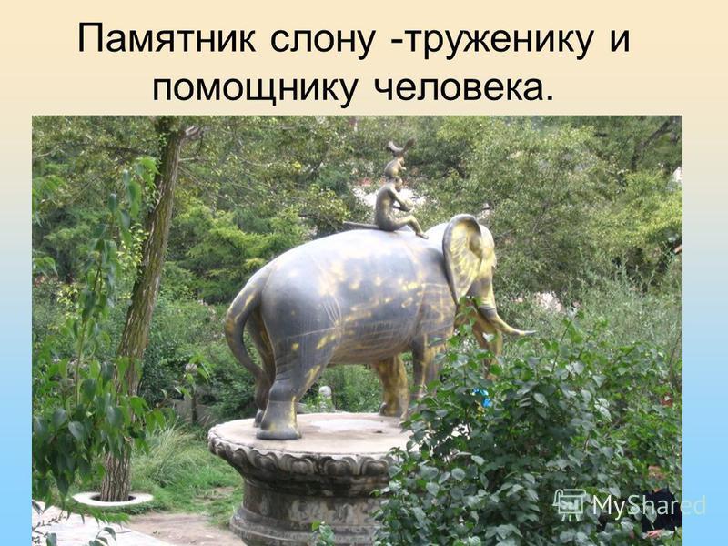 Памятник слону -труженику и помощнику человека.
