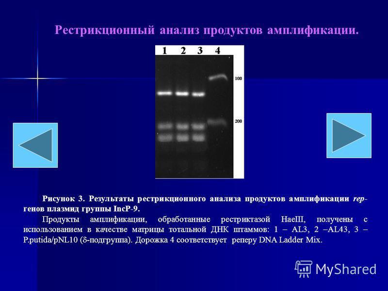 Рестрикционный анализ продуктов амплификации. Рисунок 3. Результаты рестрикционного анализа продуктов амплификации rep- генов плазмид группы IncP-9. Продукты амплификации, обработанные рестриктазой HaeIII, получены с использованием в качестве матрицы