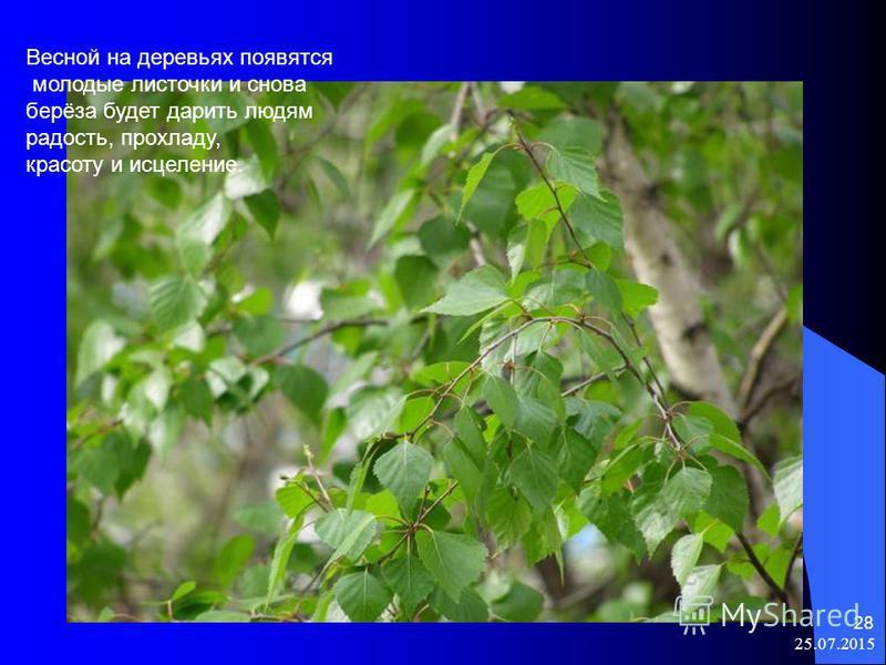 25.07.2015 28 Весной на деревьях появятся молодые листочки и снова берёза будет дарить людям радость, прохладу, красоту и исцеление.