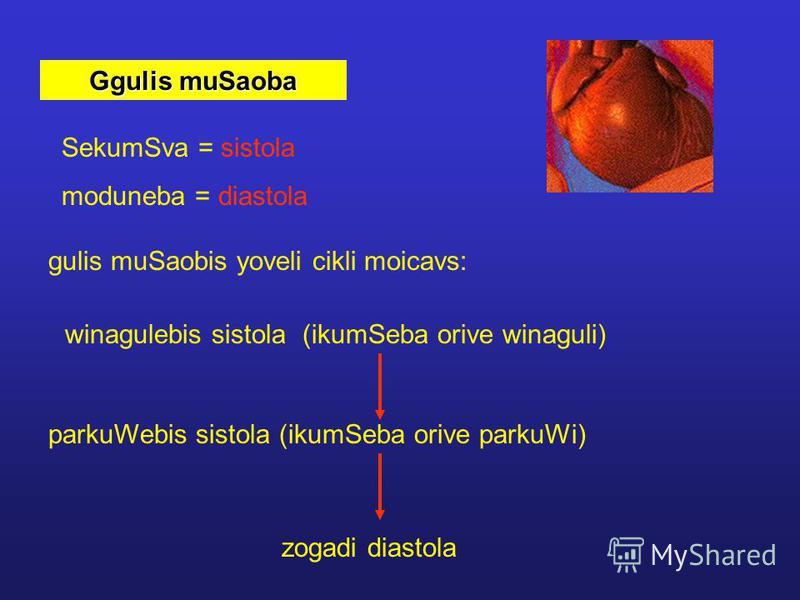 Ggulis muSaoba SekumSva = sistola moduneba = diastola gulis muSaobis yoveli cikli moicavs: winagulebis sistola (ikumSeba orive winaguli) parkuWebis sistola (ikumSeba orive parkuWi) zogadi diastola