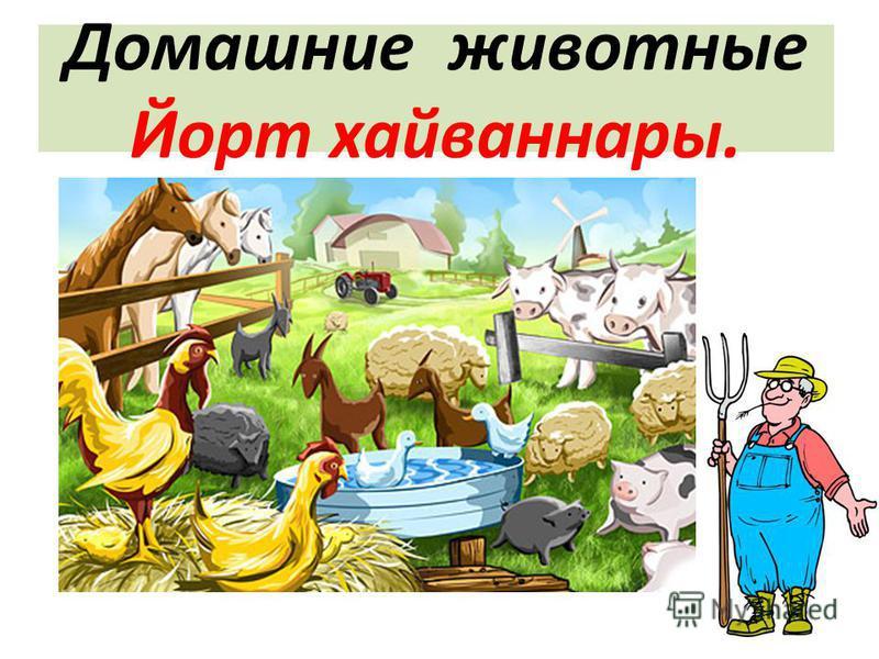 Домашние животные Йорт хайваннары.