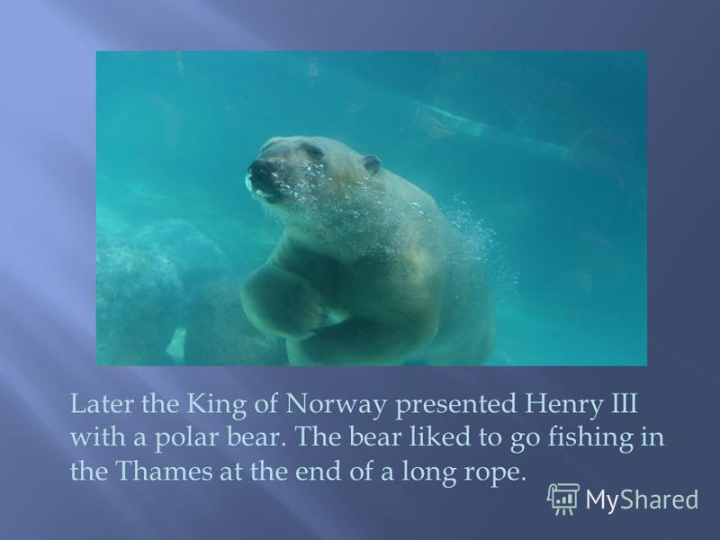Later the King of Norway presented Henry III with a polar bear. The bear liked to go fishing in the Thames at the end of a long rope.