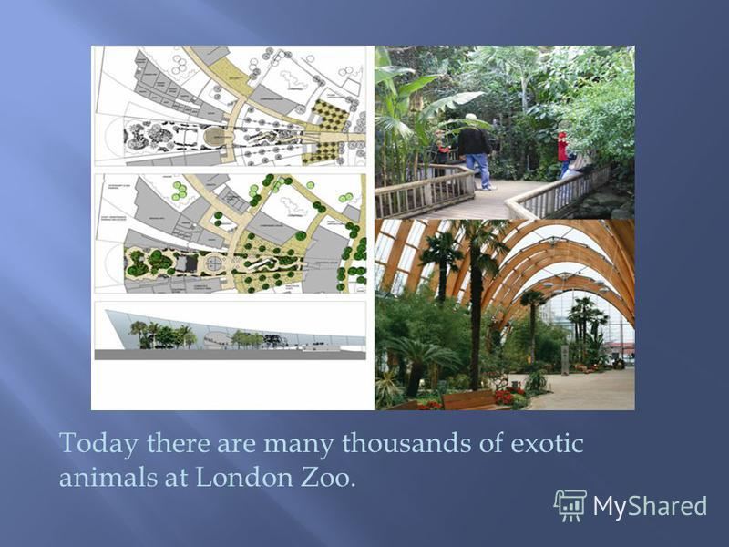 Today there are many thousands of exotic animals at London Zoo.