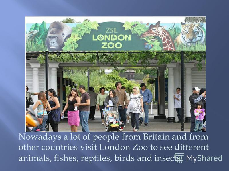 Nowadays a lot of people from Britain and from other countries visit London Zoo to see different animals, fishes, reptiles, birds and insects.