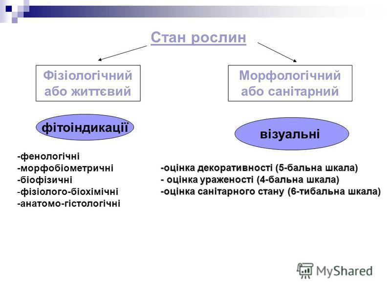 Фізіологічний або життєвий Морфологічний або санітарний Стан рослин -фенологічні -морфобіометричні -біофізичні -фізіолого-біохімічні -анатомо-гістологічні візуальні фітоіндикації -оцінка декоративності (5-бальна шкала) - оцінка ураженості (4-бальна ш