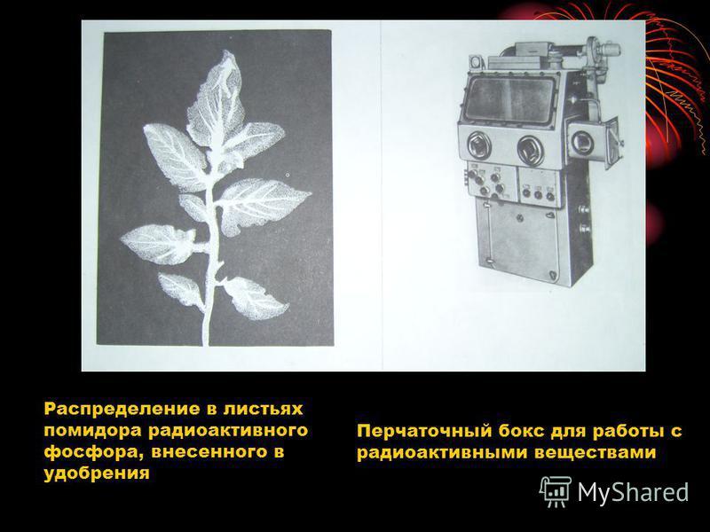Распределение в листьях помидора радиоактивного фосфора, внесенного в удобрения Перчаточный бокс для работы с радиоактивными веществами