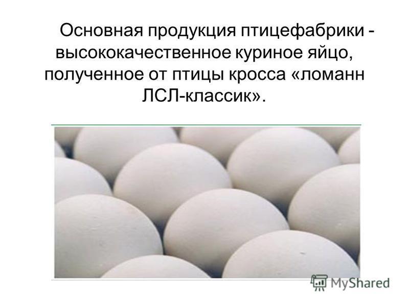 Основная продукция птицефабрики - высококачественное куриное яйцо, полученное от птицы кросса «ломан ЛСЛ-классик».
