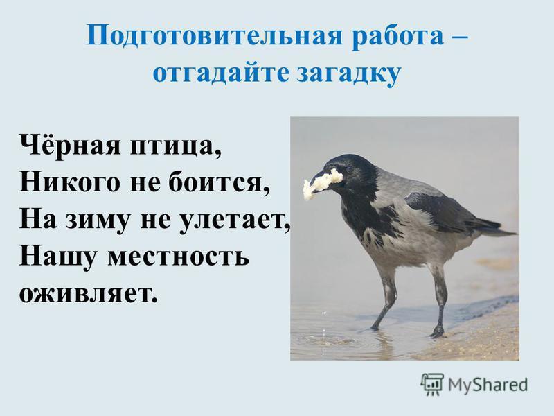 Подготовительная работа – отгадайте загадку Чёрная птица, Никого не боится, На зиму не улетает, Нашу местность оживляет.