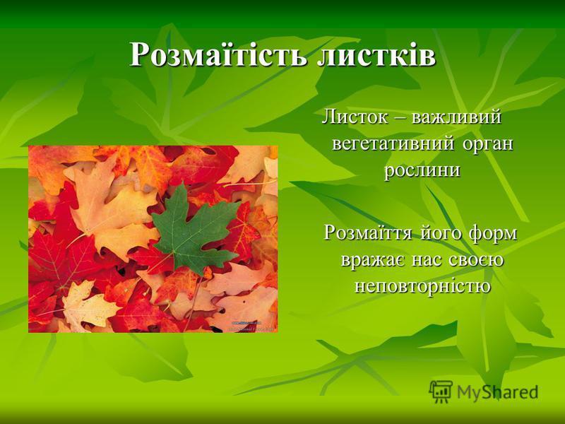 Розмаїтість листків Листок – важливий вегетативний орган рослини Розмаїття його форм вражає нас своєю неповторністю Розмаїття його форм вражає нас своєю неповторністю