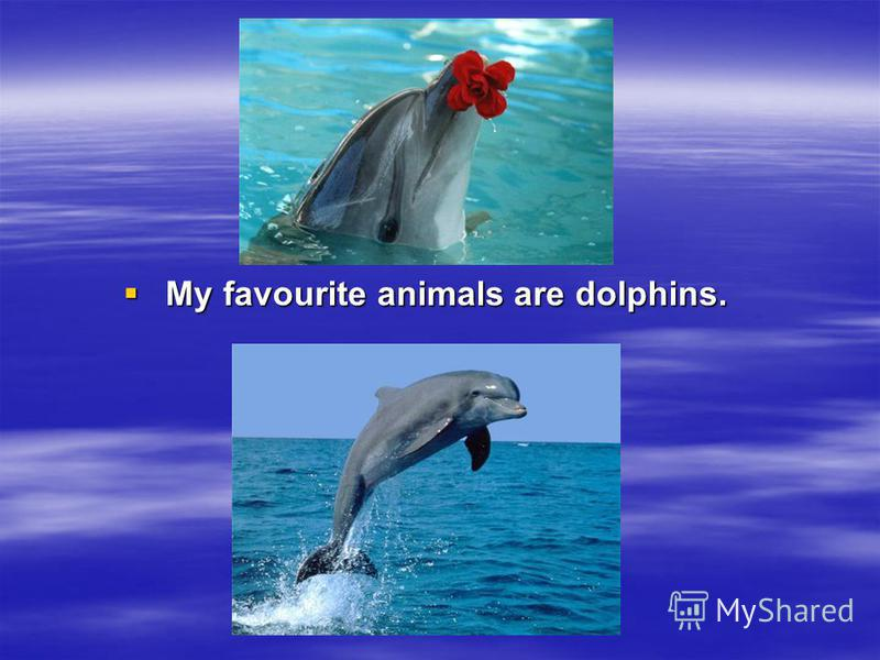 My favourite animals are dolphins. My favourite animals are dolphins.