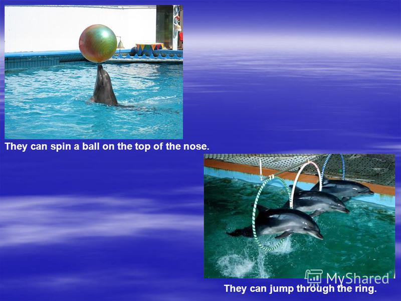 They can jump through the ring. They can spin a ball on the top of the nose.