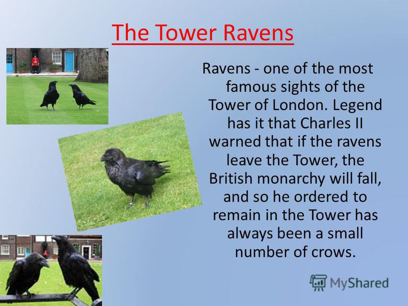 The Tower Ravens Ravens - one of the most famous sights of the Tower of London. Legend has it that Charles II warned that if the ravens leave the Tower, the British monarchy will fall, and so he ordered to remain in the Tower has always been a small
