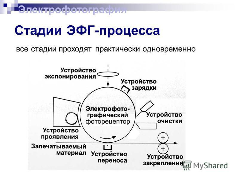 Стадии ЭФГ-процесса все стадии проходят практически одновременно Электрофотография