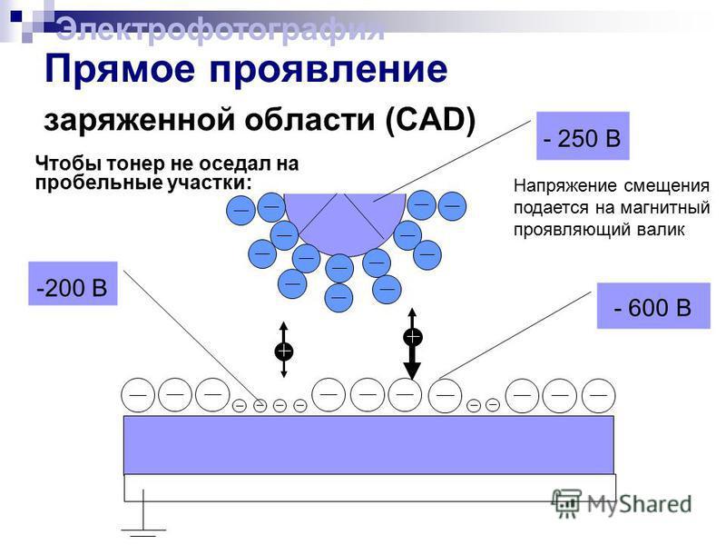 -200 В - 600 В Прямое проявление заряженной области (CAD) Чтобы тонер не оседал на пробельные участки: - 250 В Напряжение смещения подается на магнитный проявляющий валик