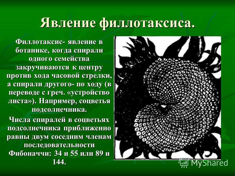 Явление филлотаксиса. Филлотаксис- явление в ботанике, когда спирали одного семейства закручиваются к центру против хода часовой стрелки, а спирали другого- по ходу (в переводе с греч. «устройство листа»). Например, соцветья подсолнечника. Числа спир