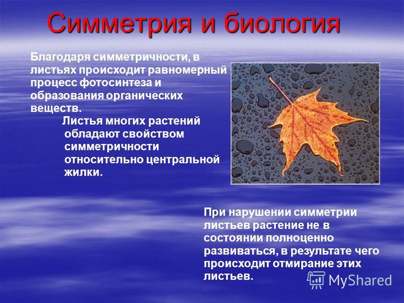Симметрия и биология Благодаря симметричности, в листьях происходит равномерный процесс фотосинтеза и образования органических веществ. Листья многих растений обладают свойством симметричности относительно центральной жилки. При нарушении симметрии л