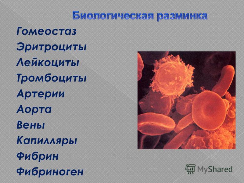 Гомеостаз Эритроциты Лейкоциты Тромбоциты Артерии Аорта Вены Капилляры Фибрин Фибриноген