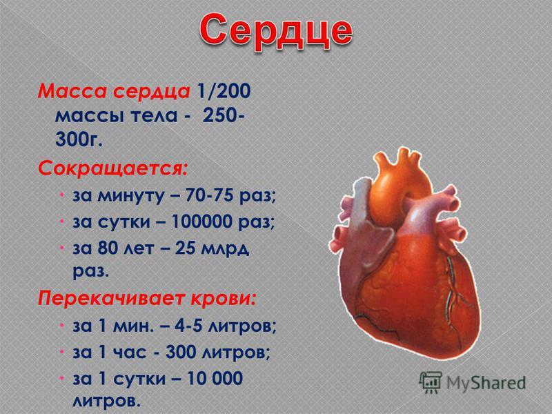 Масса сердца 1/200 массы тела - 250- 300 г. Сокращается: за минуту – 70-75 раз; за сутки – 100000 раз; за 80 лет – 25 млрд раз. Перекачивает крови: за 1 мин. – 4-5 литров; за 1 час - 300 литров; за 1 сутки – 10 000 литров.