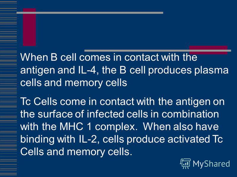 When B cell comes in contact with the antigen and IL-4, the B cell produces plasma cells and memory cells Tc Cells come in contact with the antigen on the surface of infected cells in combination with the MHC 1 complex. When also have binding with IL