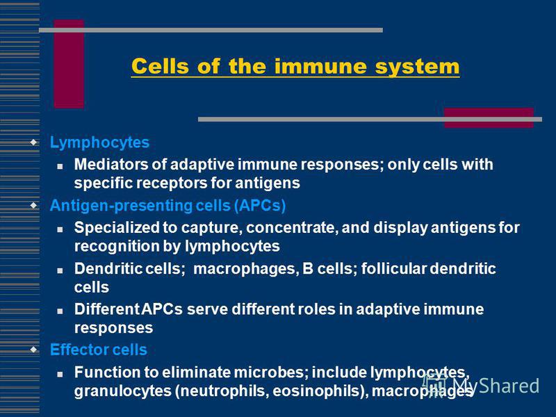 Cells of the immune system Lymphocytes Mediators of adaptive immune responses; only cells with specific receptors for antigens Antigen-presenting cells (APCs) Specialized to capture, concentrate, and display antigens for recognition by lymphocytes De