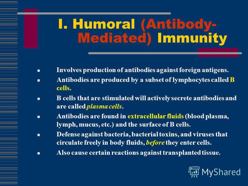 Involves production of antibodies against foreign antigens. Antibodies are produced by a subset of lymphocytes called B cells. B cells that are stimulated will actively secrete antibodies and are called plasma cells. Antibodies are found in extracell