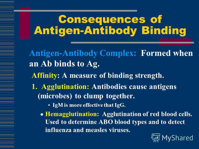 Antigen-Antibody Complex: Formed when an Ab binds to Ag. Affinity: A measure of binding strength. 1. Agglutination: Antibodies cause antigens (microbes) to clump together. IgM is more effective that IgG. Hemagglutination: Agglutination of red blood c