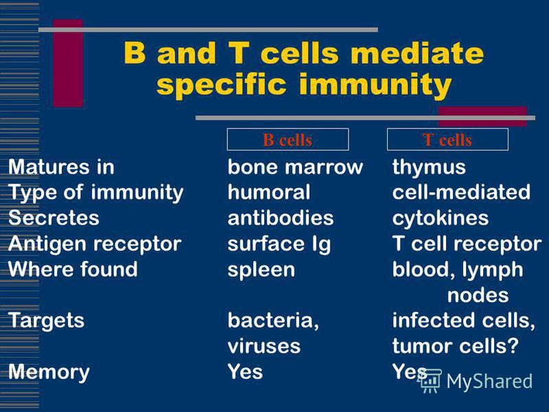 Matures inbone marrowthymus Type of immunityhumoralcell-mediated Secretesantibodiescytokines Antigen receptorsurface IgT cell receptor Where foundspleenblood, lymph nodes Targetsbacteria, infected cells, virusestumor cells? MemoryYesYes B and T cells