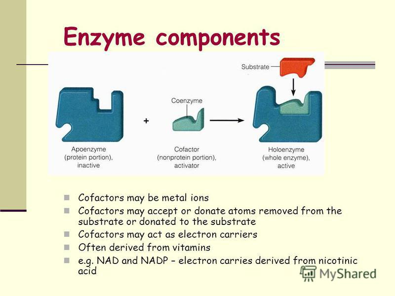 Enzyme components Cofactors may be metal ions Cofactors may accept or donate atoms removed from the substrate or donated to the substrate Cofactors may act as electron carriers Often derived from vitamins e.g. NAD and NADP – electron carries derived
