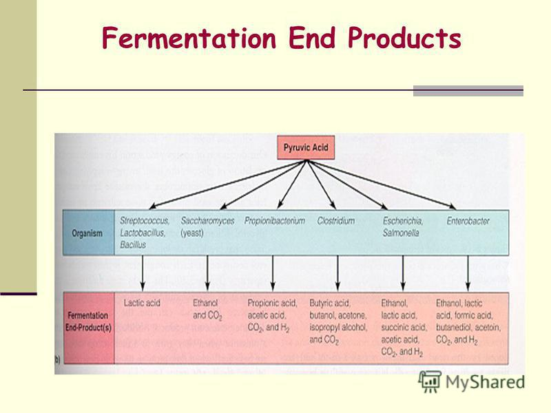 Fermentation End Products