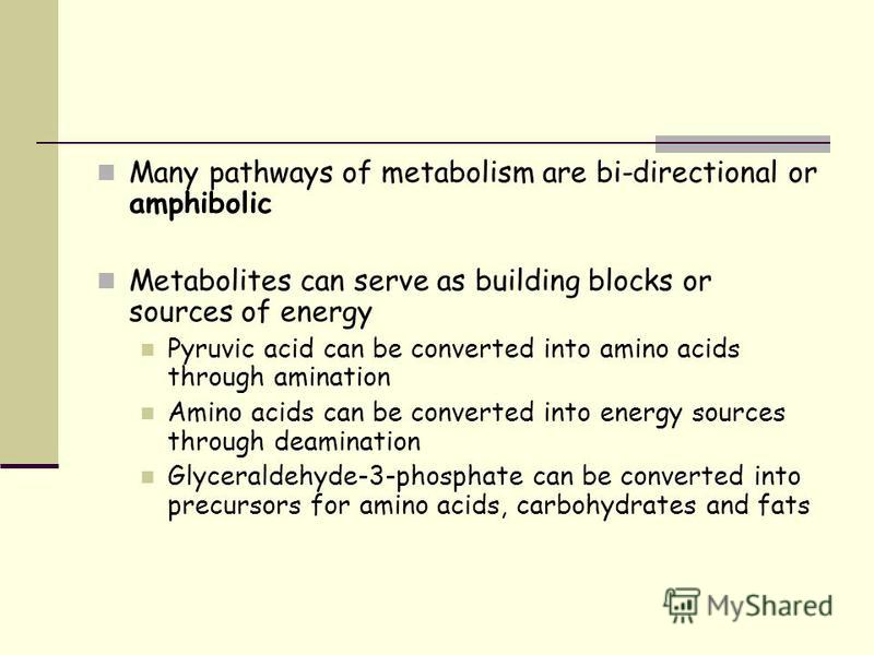 Many pathways of metabolism are bi-directional or amphibolic Metabolites can serve as building blocks or sources of energy Pyruvic acid can be converted into amino acids through amination Amino acids can be converted into energy sources through deami
