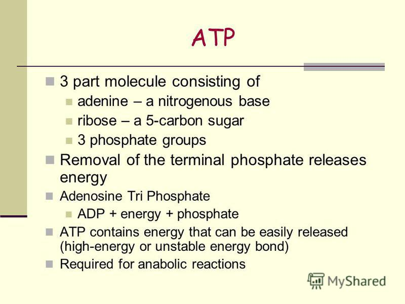 ATP 3 part molecule consisting of adenine – a nitrogenous base ribose – a 5-carbon sugar 3 phosphate groups Removal of the terminal phosphate releases energy Adenosine Tri Phosphate ADP + energy + phosphate ATP contains energy that can be easily rele