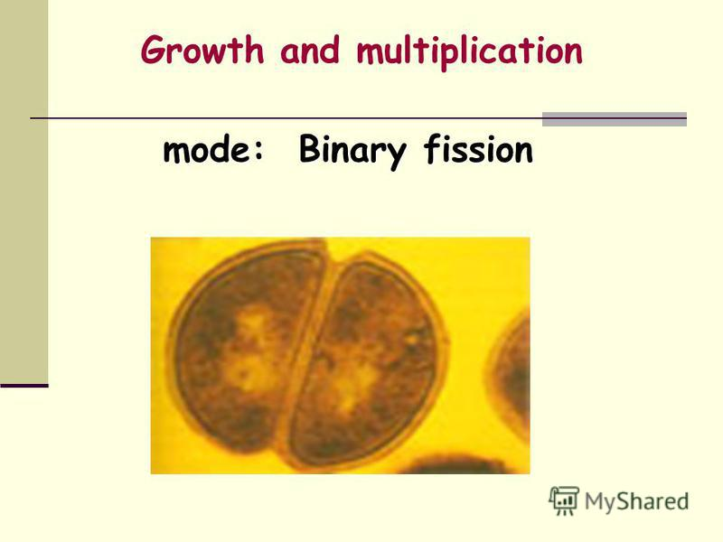Growth and multiplication mode: Binary fission mode: Binary fission