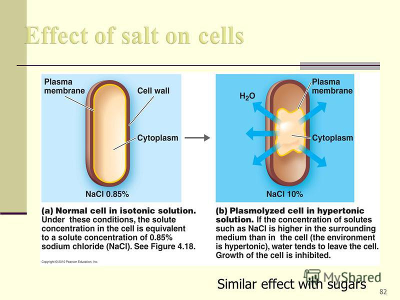the effect of salt on beetroot s cell membrane