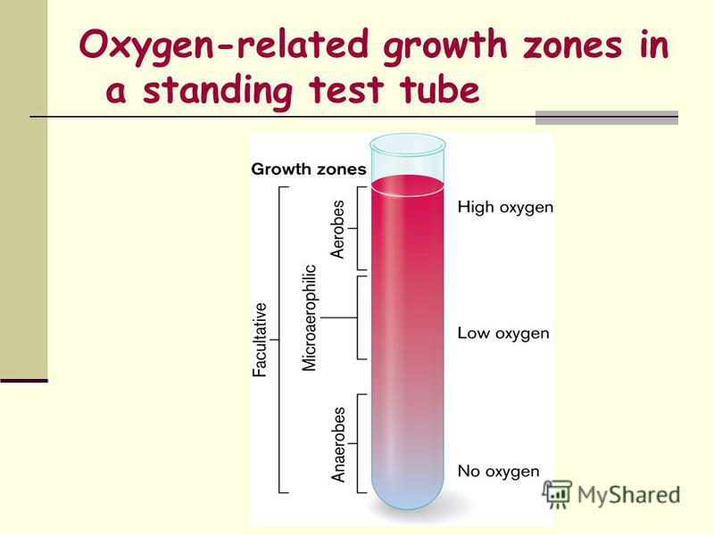 Oxygen-related growth zones in a standing test tube