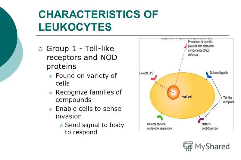 CHARACTERISTICS OF LEUKOCYTES Group 1 - Toll-like receptors and NOD proteins Found on variety of cells Recognize families of compounds Enable cells to sense invasion Send signal to body to respond