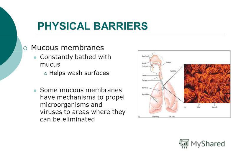 PHYSICAL BARRIERS Mucous membranes Constantly bathed with mucus Helps wash surfaces Some mucous membranes have mechanisms to propel microorganisms and viruses to areas where they can be eliminated