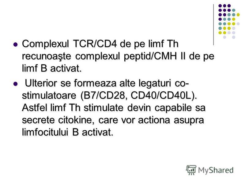 Complexul TCR/CD4 de pe limf Th recunoaşte complexul peptid/CMH II de pe limf B activat. Complexul TCR/CD4 de pe limf Th recunoaşte complexul peptid/CMH II de pe limf B activat. Ulterior se formeaza alte legaturi co- stimulatoare (B7/CD28, CD40/CD40L